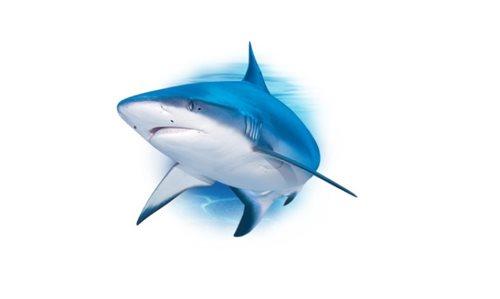 cremă de articole de rechin)